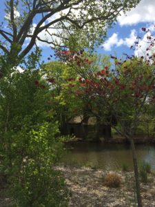 Redbud, river birch and stone hut
