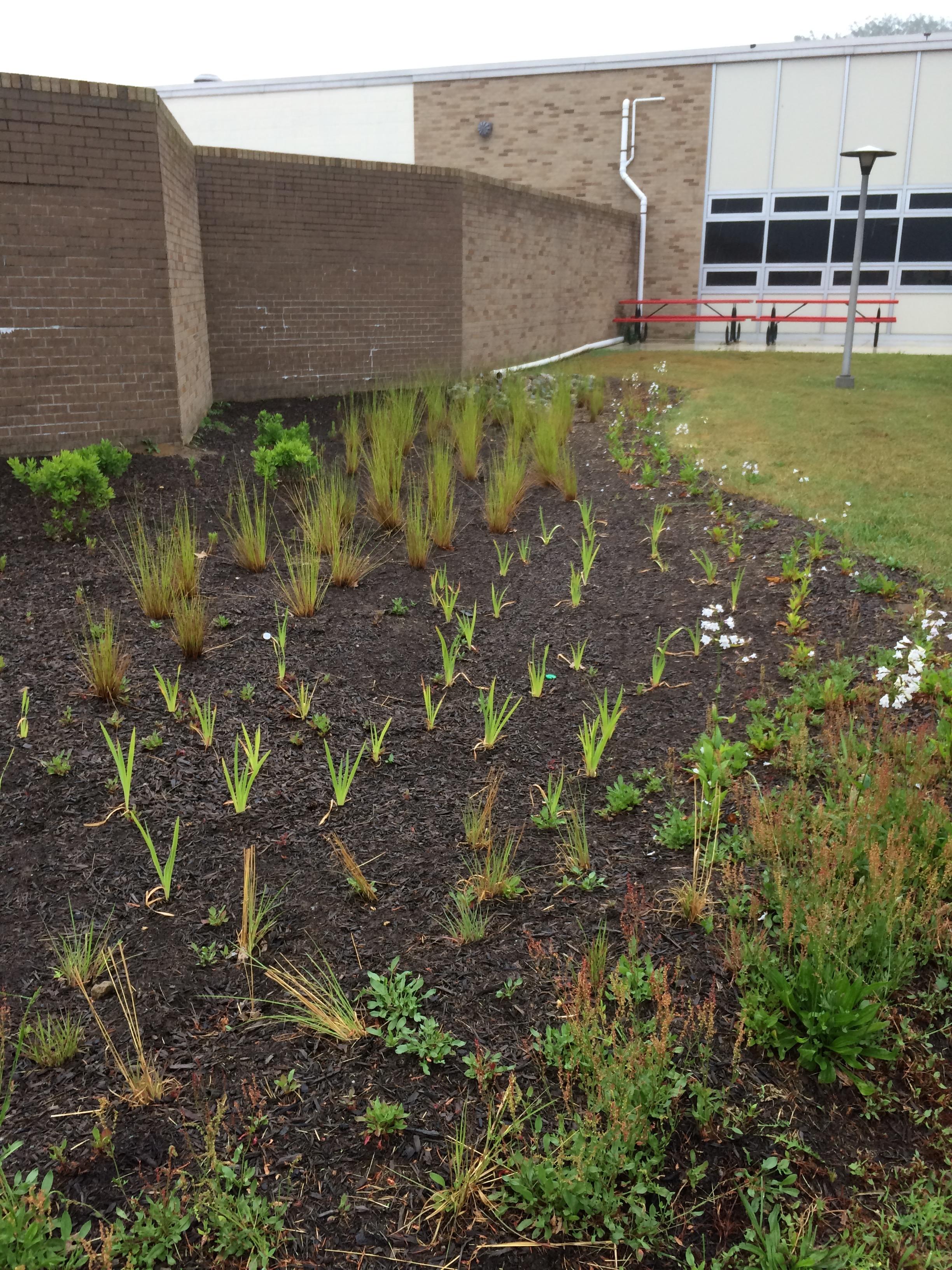 Ocean Township High School Rain Garden is looking good | Whale Pond ...